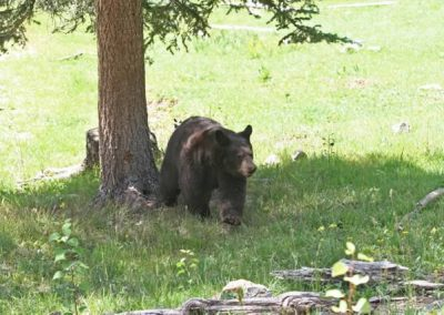 Bear-Wildlife Center