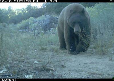 Bear_Rossiter_CE