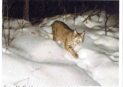 Bobcat - Connie & Bob