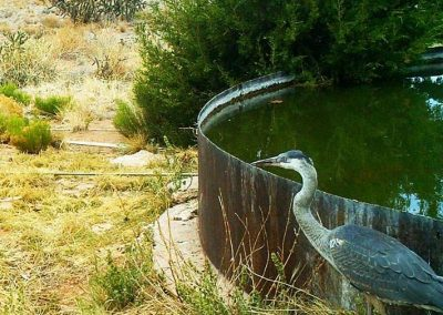 Great Blue Heron Caught on Wildlife Camera