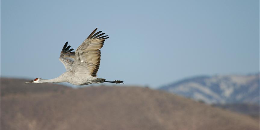 E-News – Birds, Biodiversity & Big Ideas